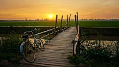 Pretty Bicycle Wallpaper 46135