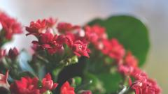 Red Flowers Wallpaper 46538