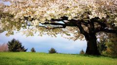 Spring Wallpaper 45891