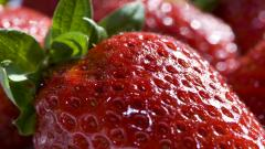 Strawberry Up Close Wallpaper 47798