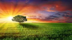 Windows Nature Wallpaper 45428