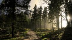 Wonderful Forest Wallpaper 46099