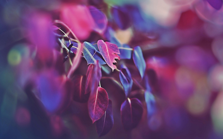 beautiful macro wallpaper 45481
