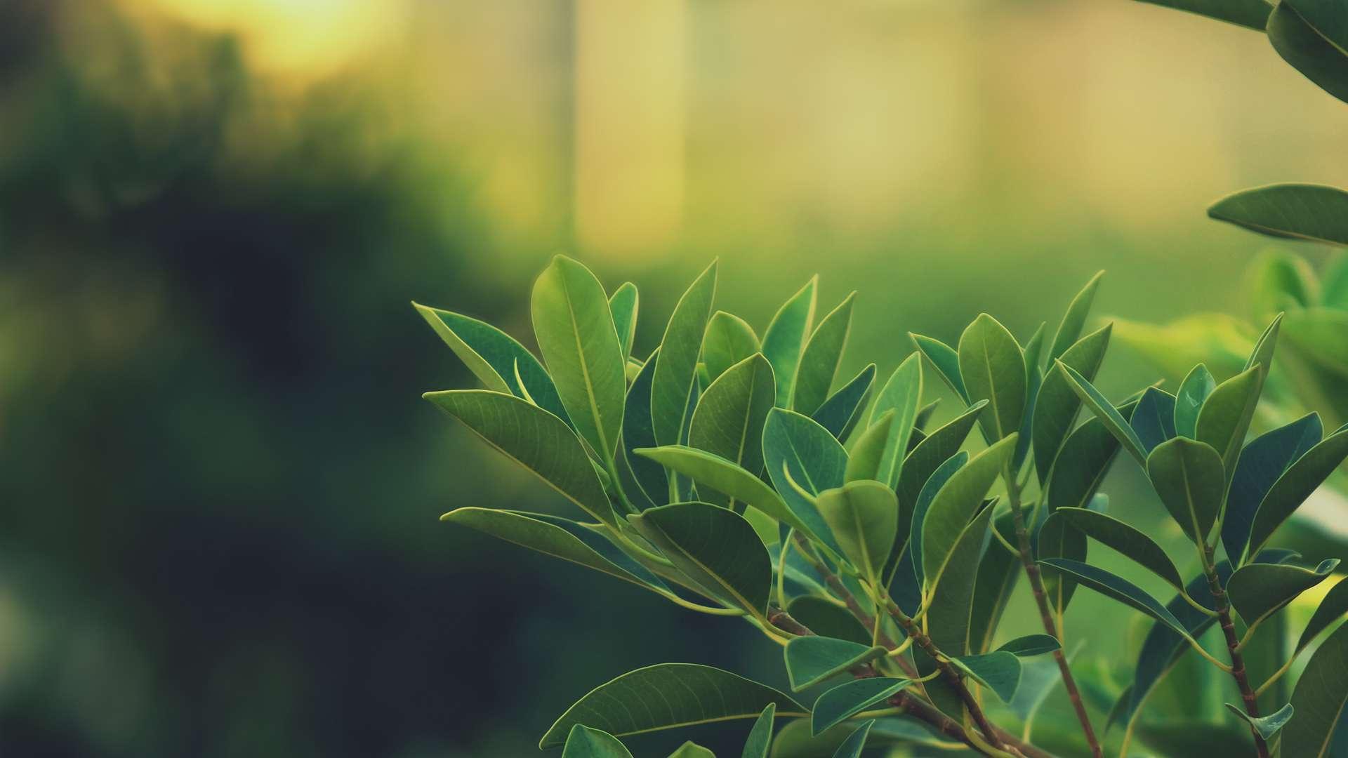 lovely leaves wallpaper 45921