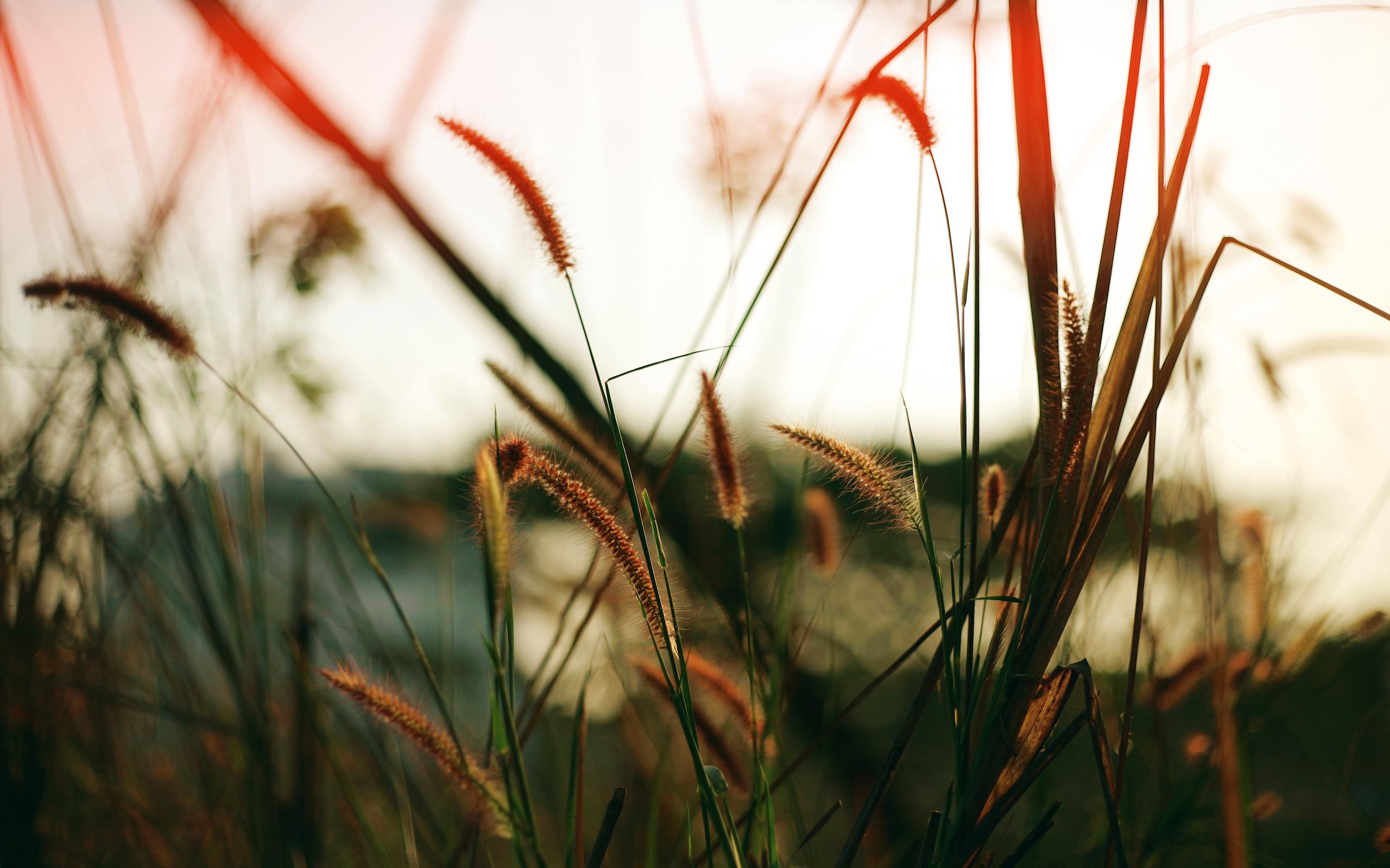 lovely nature blur wallpaper 47110
