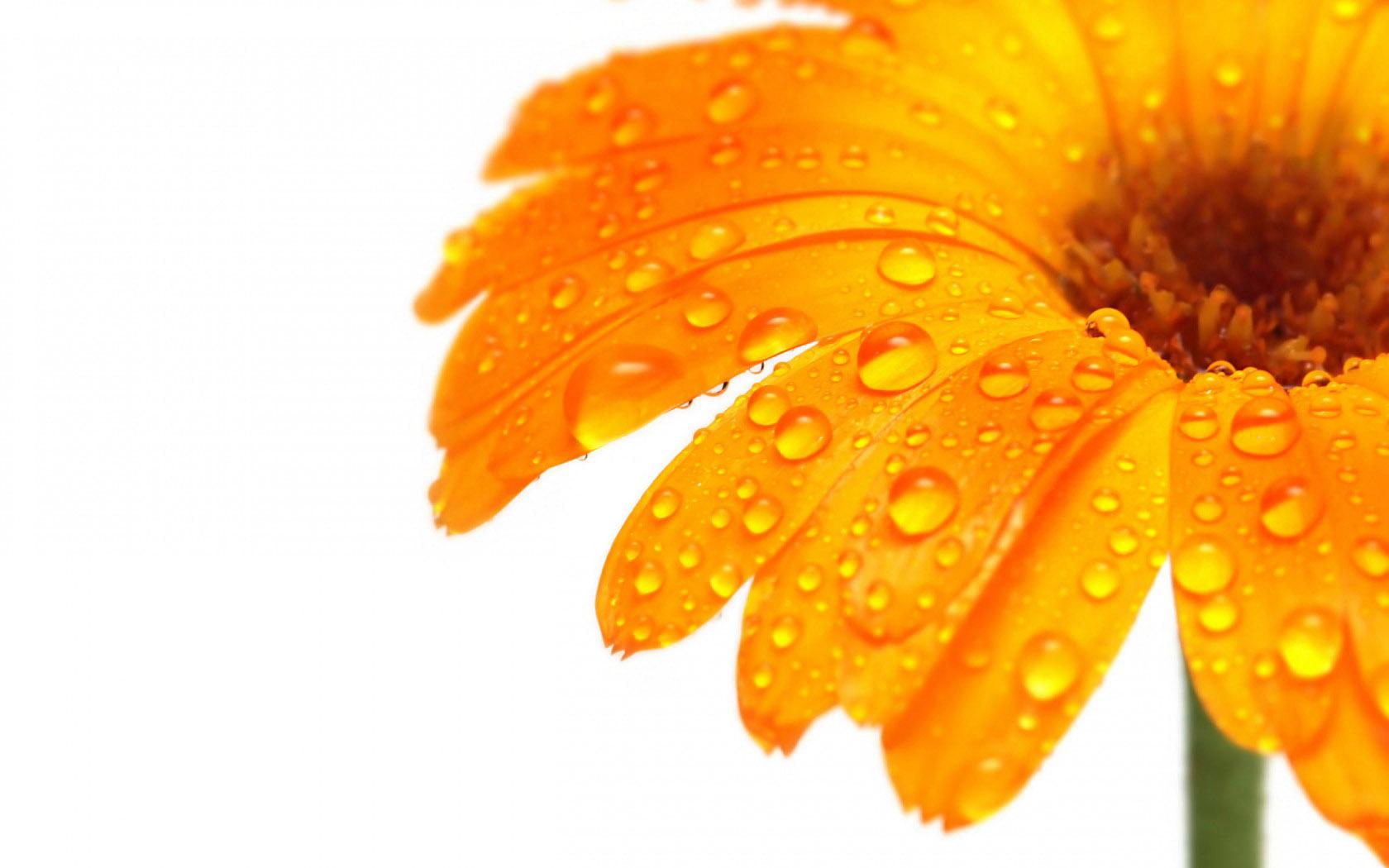 orange flowers 46801