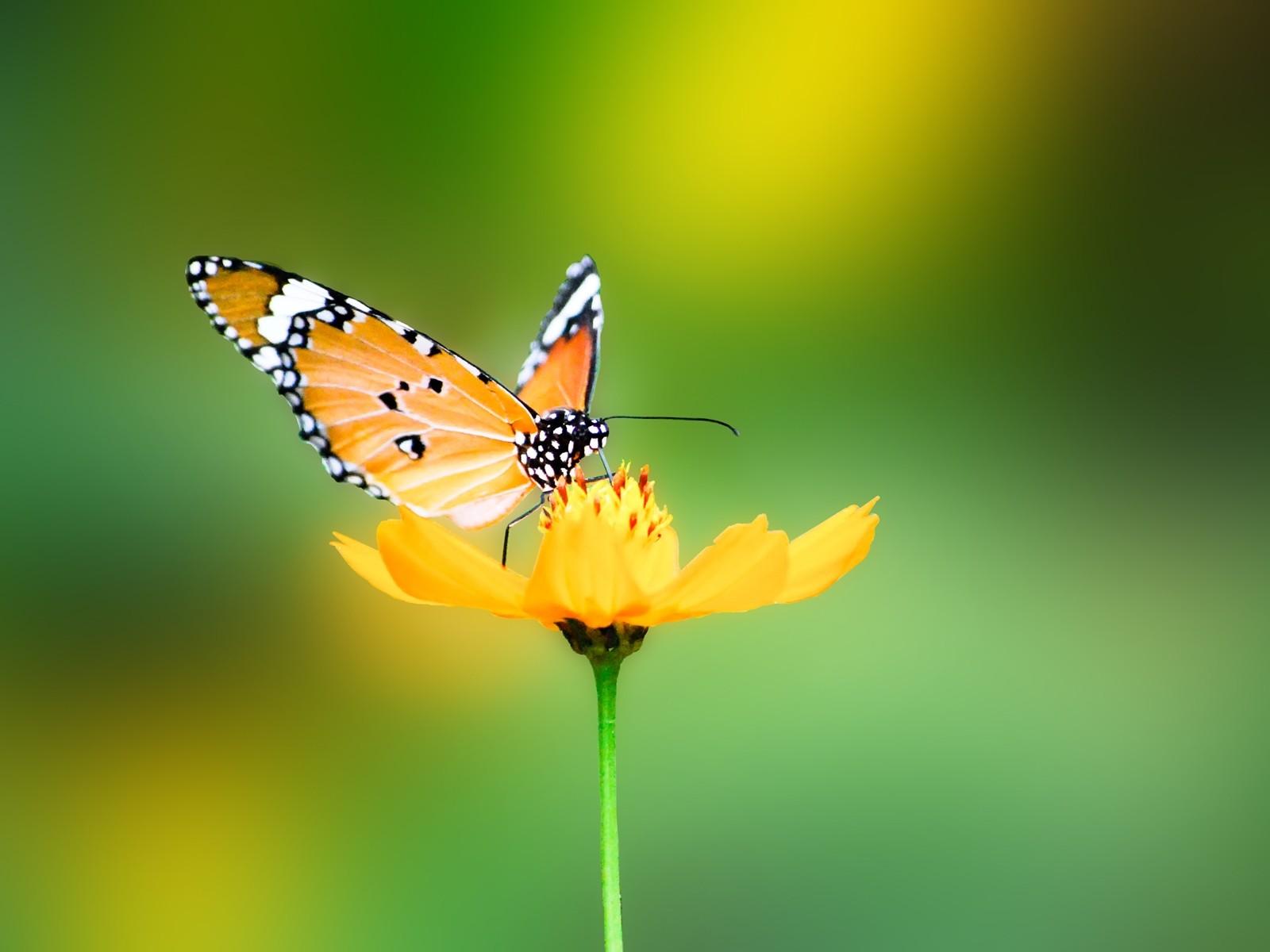stunning butterfly wallpaper 45642