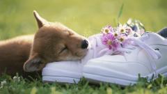 Adorable Shoes Wallpaper 45468