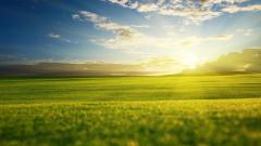 Beautiful Grass Field Wallpaper 45832
