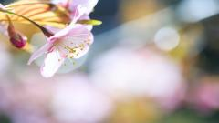 Beautiful Nature Blur Wallpaper 47111