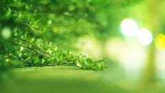 Bright Green Wallpaper 48534