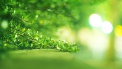 Bright Green Wallpaper 48534