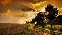 Gorgeous Road Wallpaper 45500