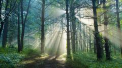 Gorgeous Sun Rays Wallpaper 45917