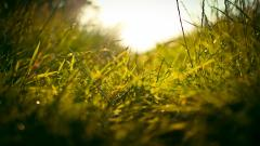 Grass Field Wallpaper 45831