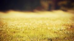 Grass Field Wallpaper 45835