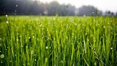 Grass Wallpaper 45830