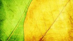 Leaves Texture Wallpaper 45456