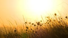 Lovely Grass Field Wallpaper 45834