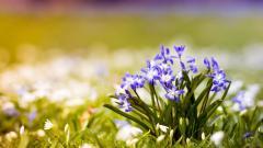 Lovely Spring Wallpaper 45319