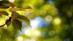 Nature Blur Wallpaper 47112