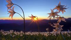 Pretty Sunset Wallpaper 45277
