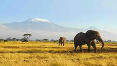 Stunning Elephant Wallpaper 45306