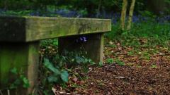 Wonderful Bench Wallpaper 46940