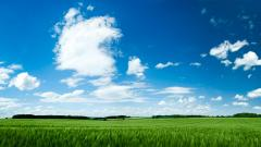 Wonderful Grass Field Wallpaper 45833