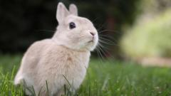 Bunny Wallpaper HD 45558