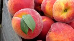 Peaches Close Up Wallpaper 46052