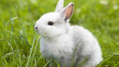 Wonderful Rabbit Wallpaper 45555
