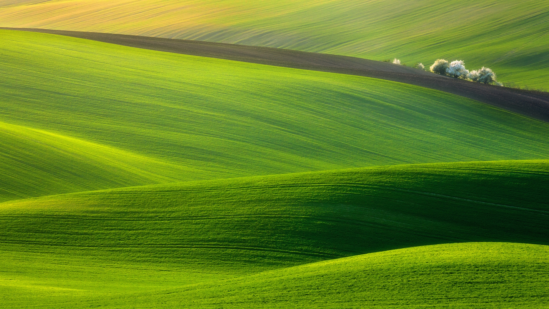 wonderful field wallpaper 45544