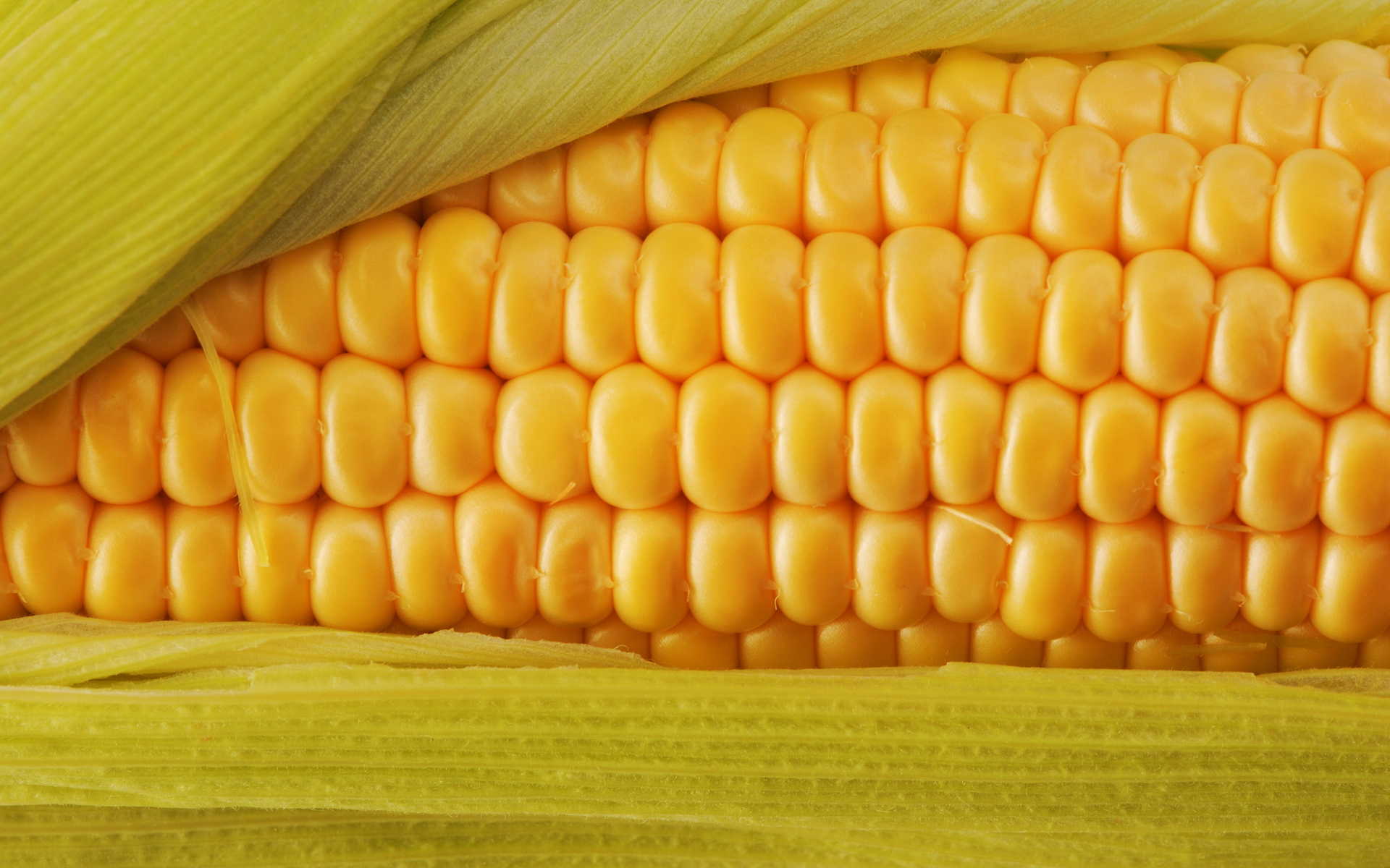 corn close up wallpaper 46114