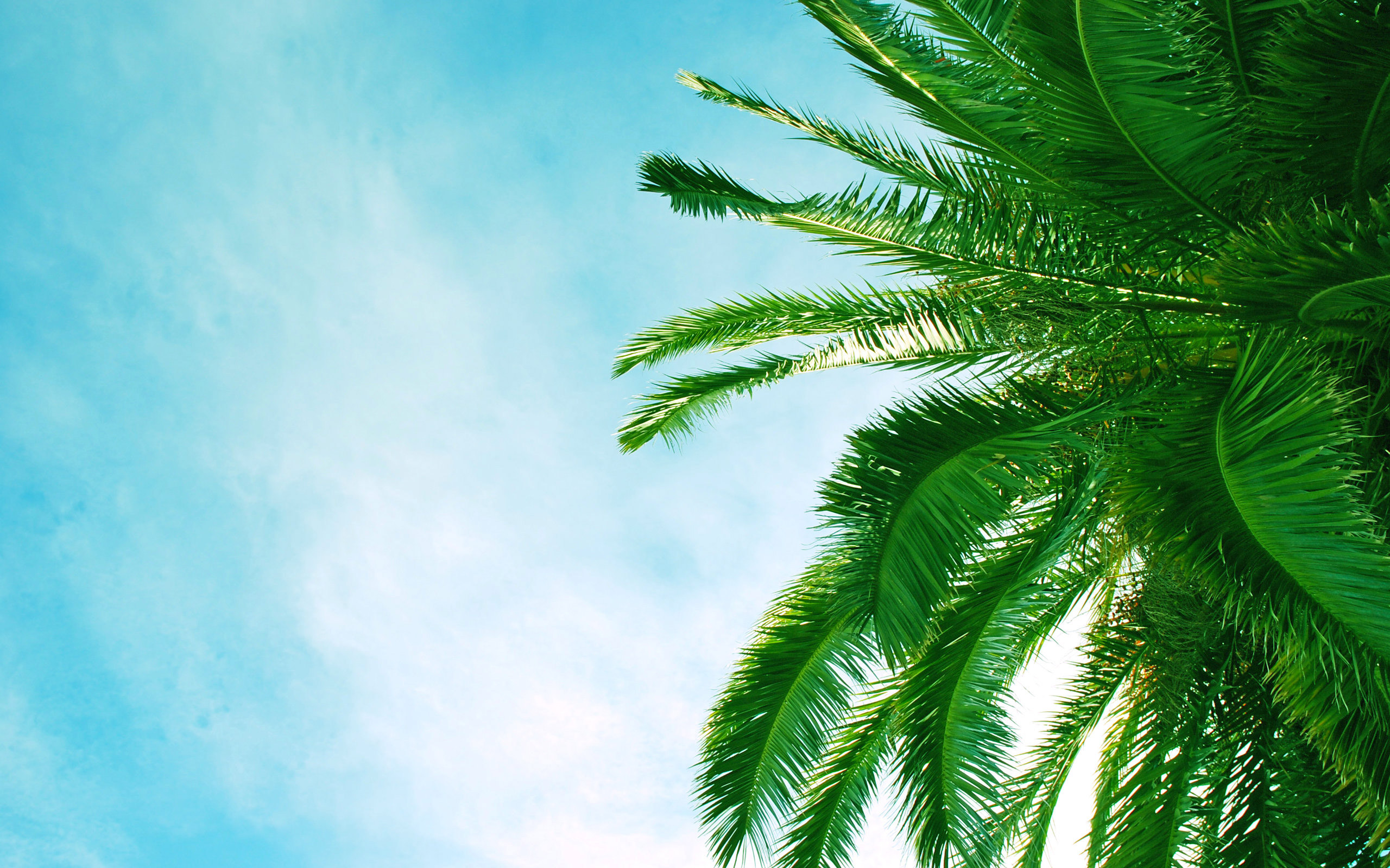 palm tree wallpaper 45857 2560x1600 px hdwallsource com