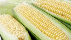Corn Wallpaper 46113