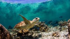 Fantastic Turtle Wallpaper 45756