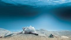 Fantastic Underwater Wallpaper 46721
