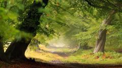 Forest Wallpaper 46822