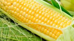 Fresh Corn Wallpaper 46115