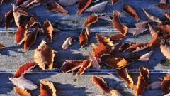 Frost Leaves Wallpaper 46527