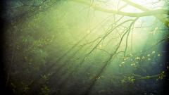 Nature Light Wallpaper 46718