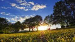 Wonderful Meadow Wallpaper 46717