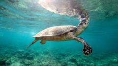Wonderful Turtle Wallpaper 45755