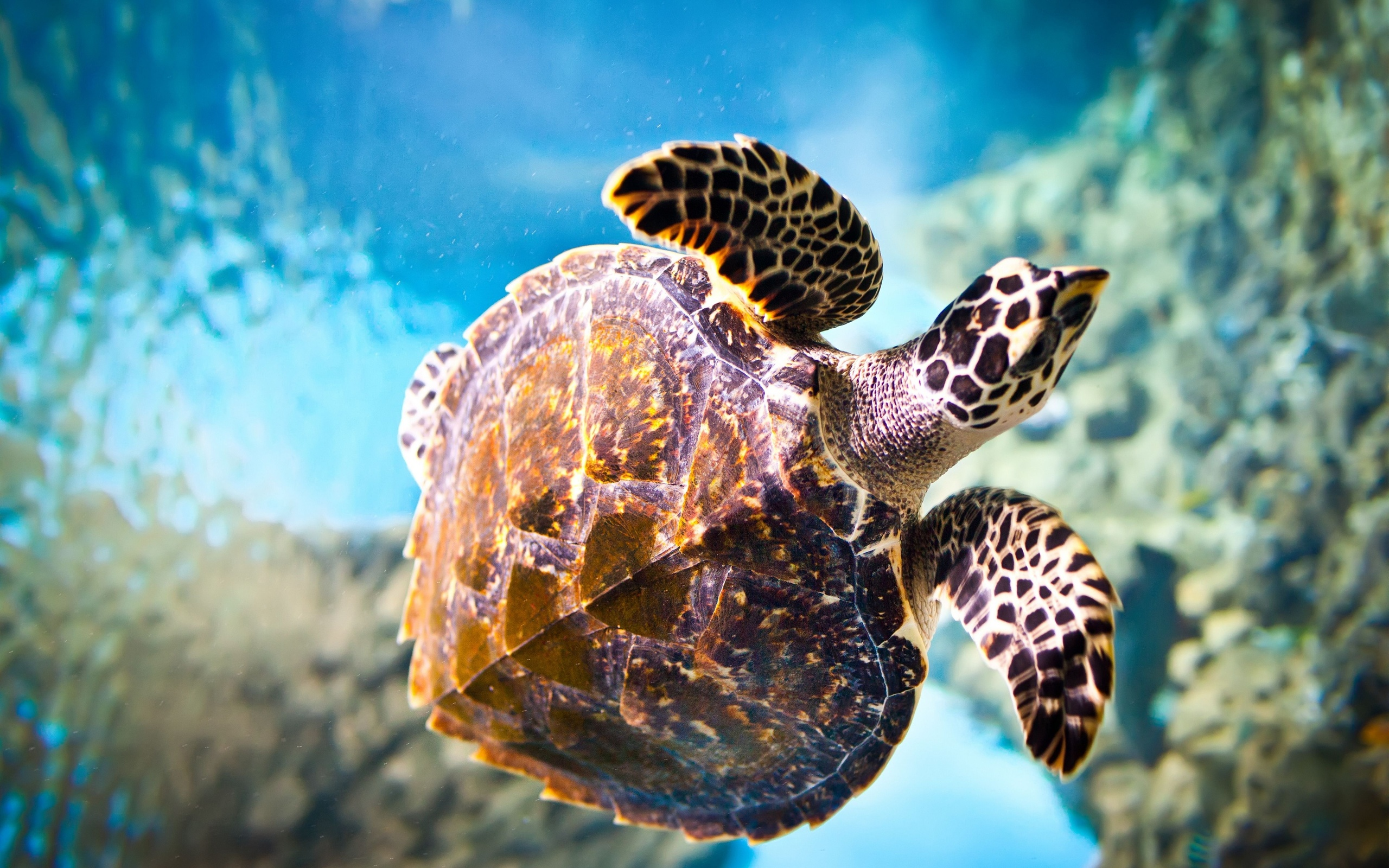 turtle close up wallpaper 46714