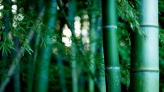 Bamboo Forest Bokeh Wallpaper 48863