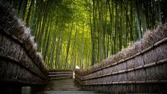 Bamboo Forest Path Wallpaper 48866