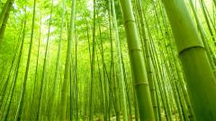 Bamboo Forest Wallpaper 48862