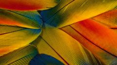 Colorful Feathers Wallpaper 47062