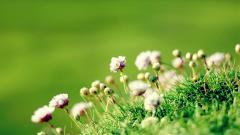 Flower Wallpaper 46599